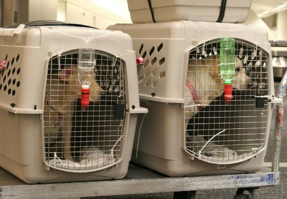 Shipping your pets safely when travel with them